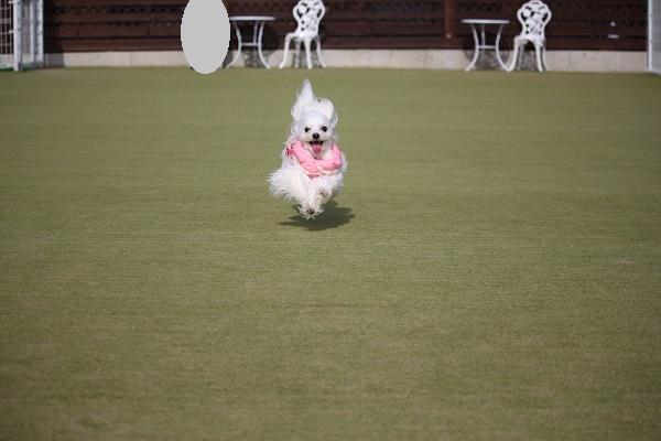 2016.02.17 ペットランドミクニ精華店②-14