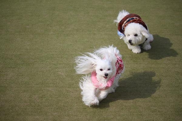 2016.02.19 ペットランドミクニ精華店④-6
