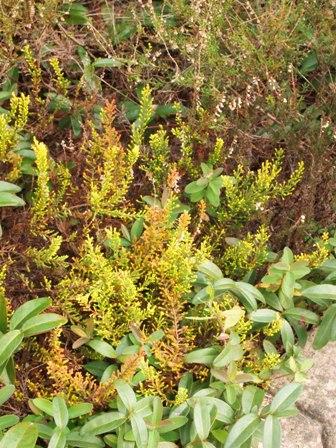 my-garden 065 (2)