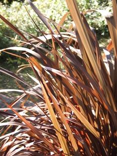 my-garden 087 (2)