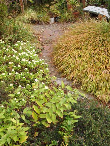 my-garden 041