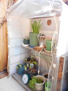 my-garden 016 (3)