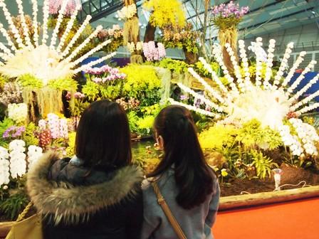 my-garden 250