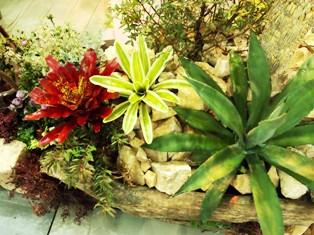 my-garden 168