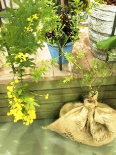 my-garden 215