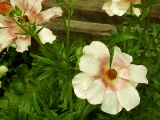 my-garden 176
