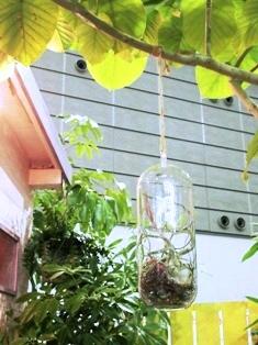 my-garden 164