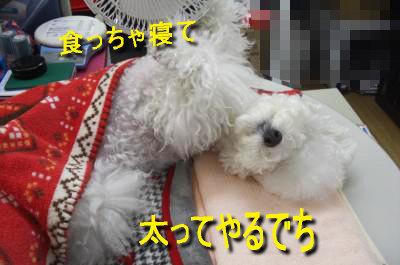 CIMG5462_ssc.jpeg