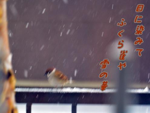 のぞき見雀2-2俳句