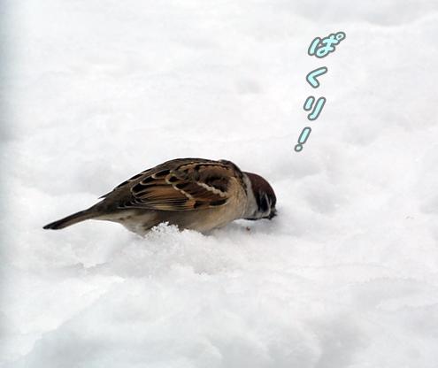 雪に埋もれて1ぱくり