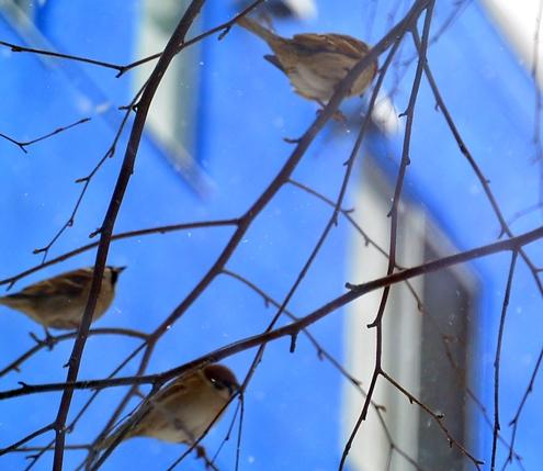 樹上雀1-1
