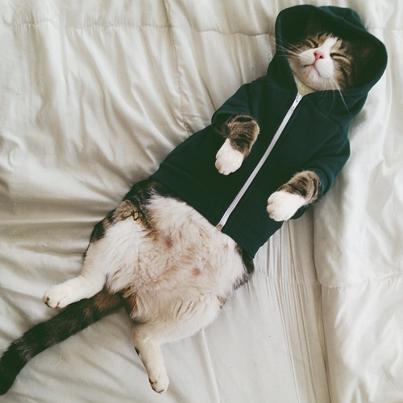 130620-Sleeping-Cat-In-A-Hoodie.png