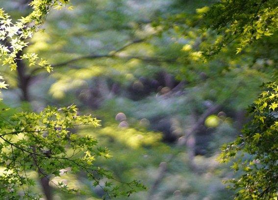 bkbk9.jpg