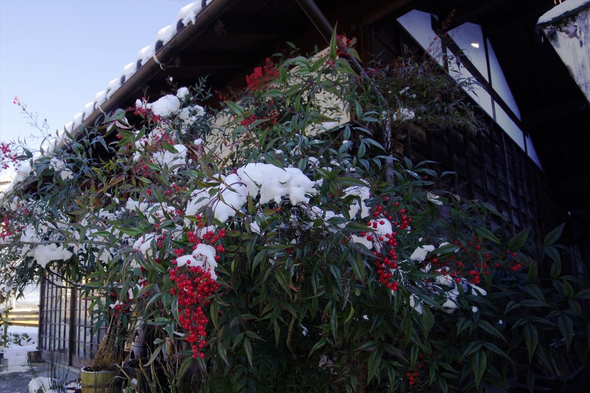 雪と南天_R