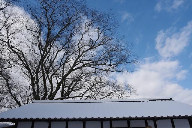 県北の冬6