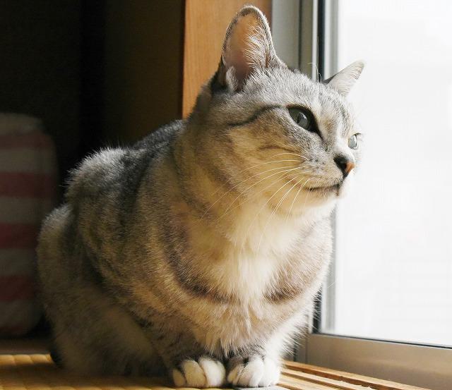 ネコの日1