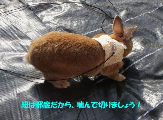 pig 20160126