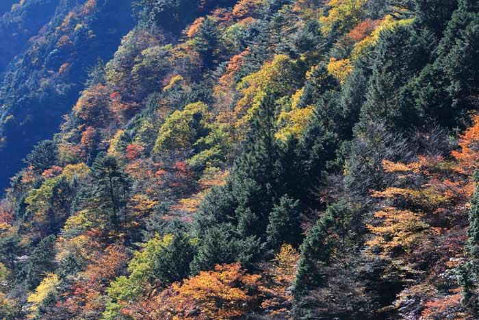 みたらい渓谷 紅葉2