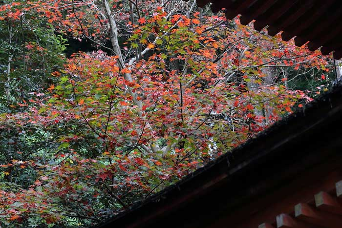浄瑠璃寺 紅葉3