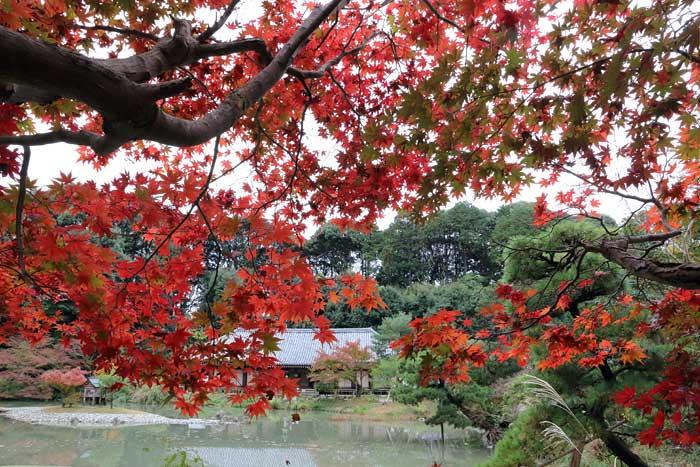 浄瑠璃寺 紅葉1