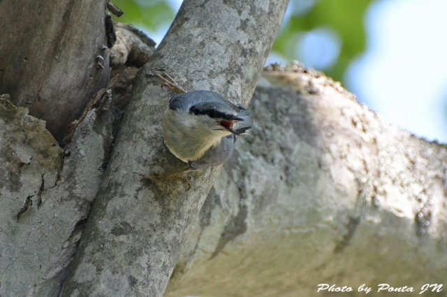 bird1507-0004.jpg