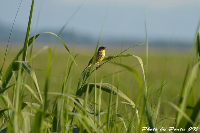 bird1507-0005.jpg