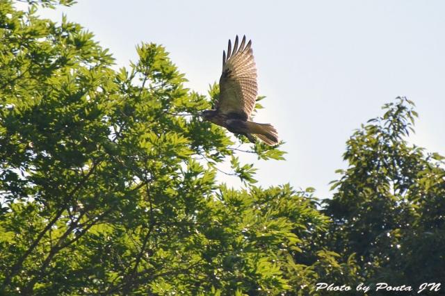 bird1507-0008.jpg