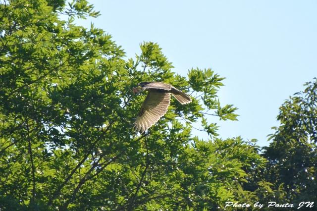 bird1507-0009.jpg