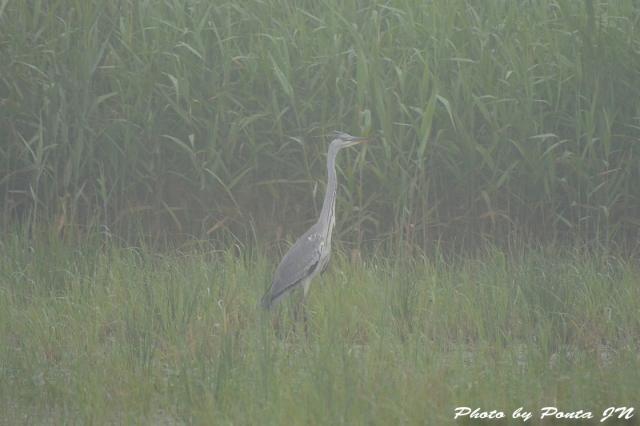 bird1507-0011.jpg