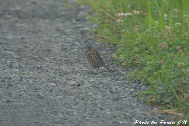 bird1507-0012.jpg