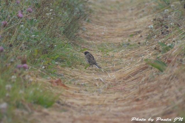 bird1507-0016.jpg