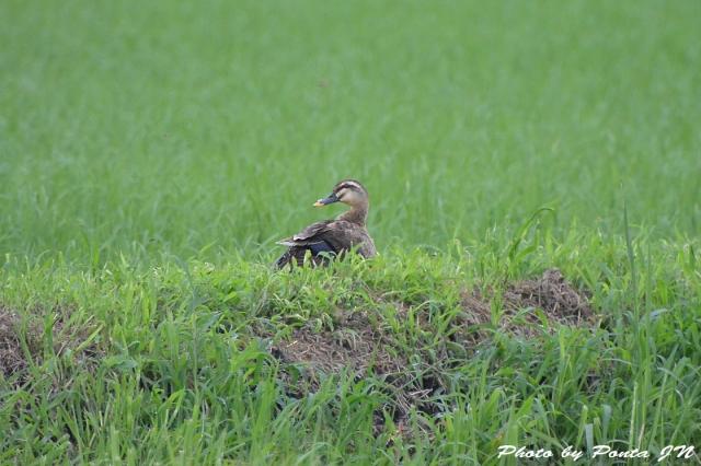 bird1507-0018.jpg