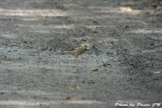 bird1507-0019.jpg