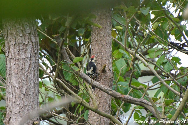 bird1507-0026.jpg