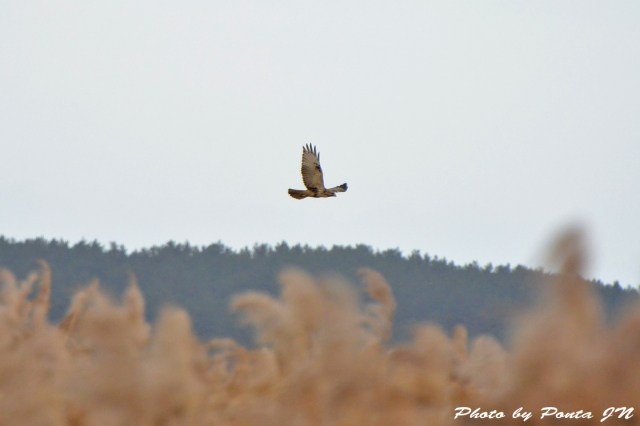 bird1511-0007.jpg