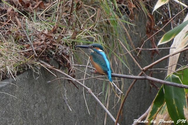 bird1511-0011.jpg