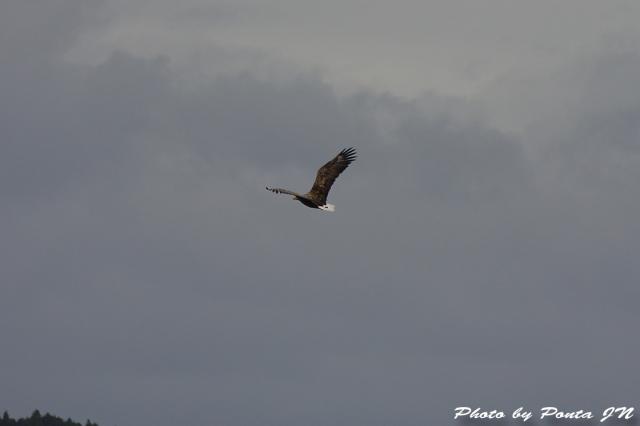 bird1511-0014.jpg
