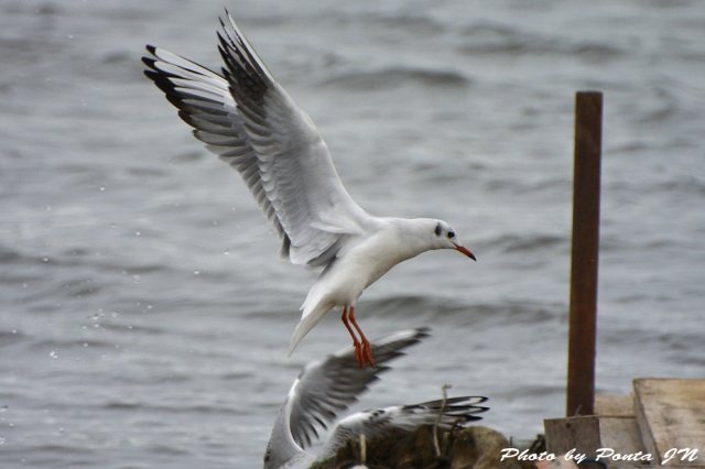 bird1511-0016.jpg