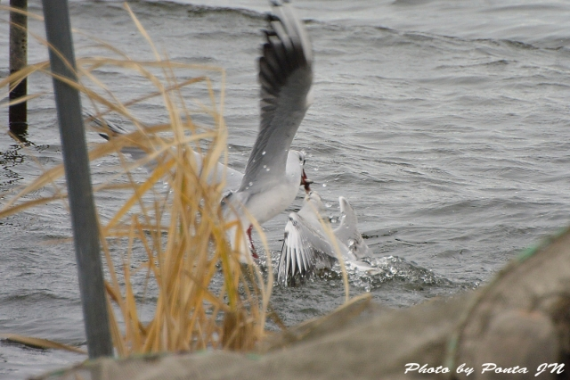 bird1511-0017.jpg