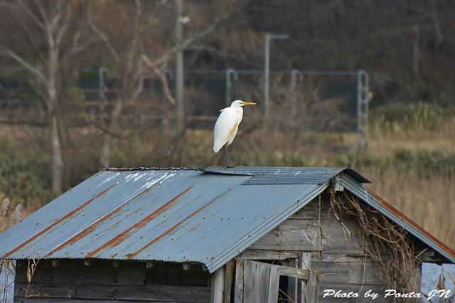 bird1512-0002a.jpg