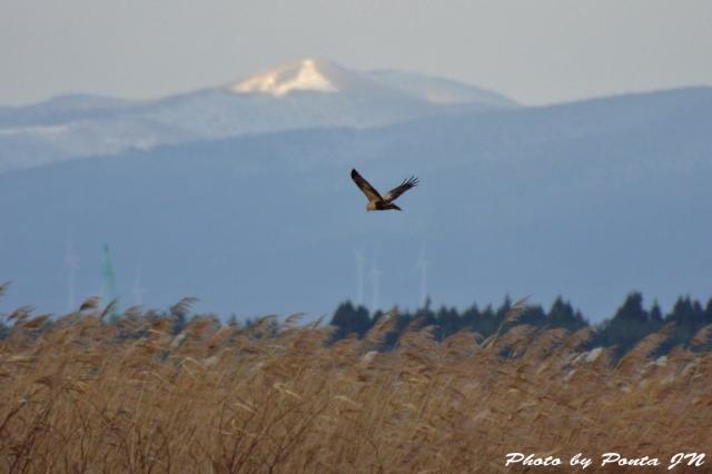 bird1512-0007.jpg