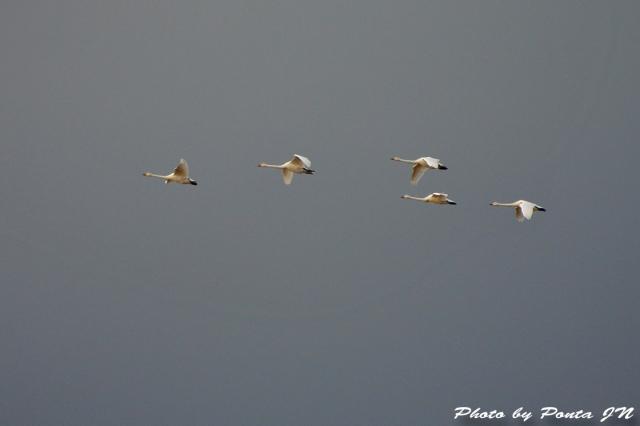 bird1512-0008.jpg