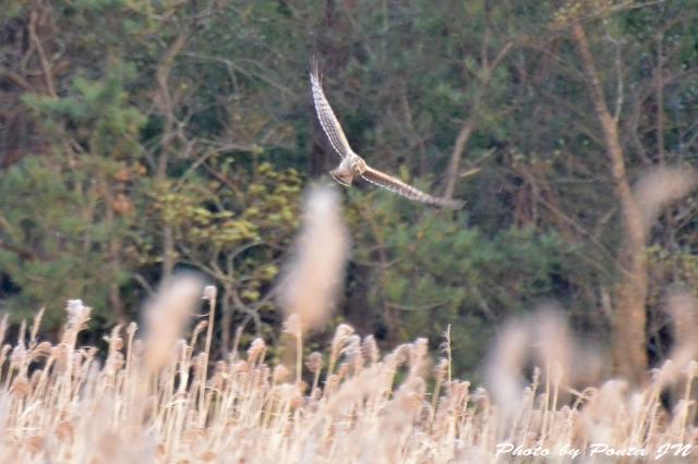 bird1512-0017.jpg