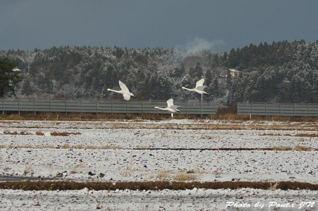 bird1512-0026.jpg