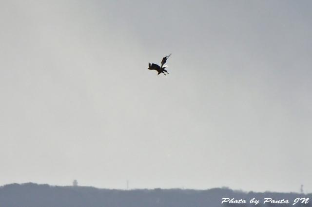 bird1512-0033.jpg