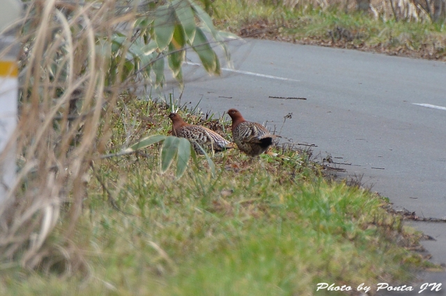 bird1512-0045.jpg
