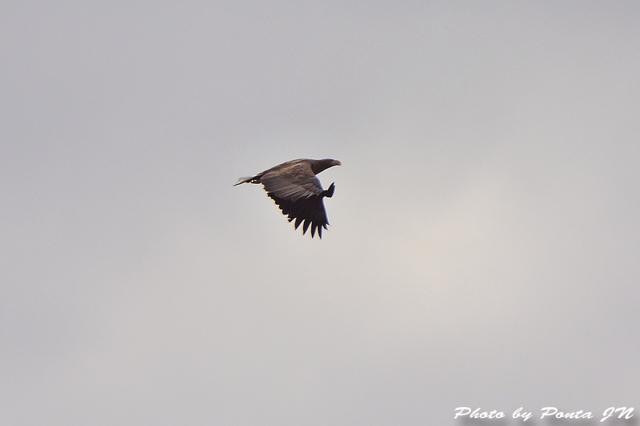 bird1512-0099.jpg