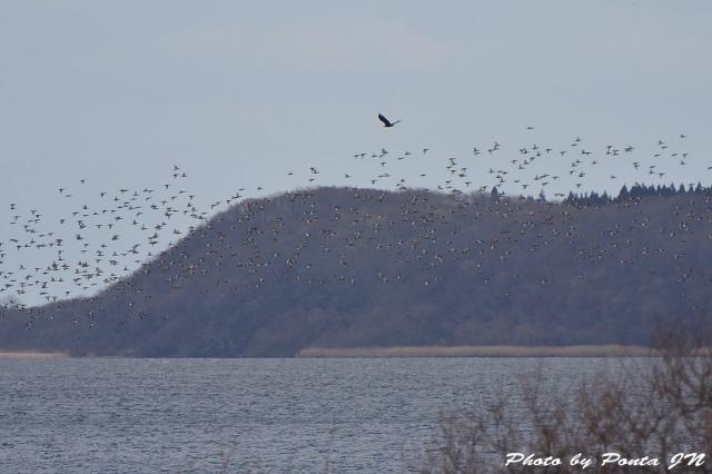 bird1512-0104.jpg