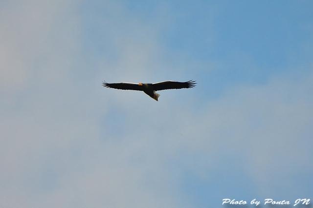 bird1512-0111.jpg