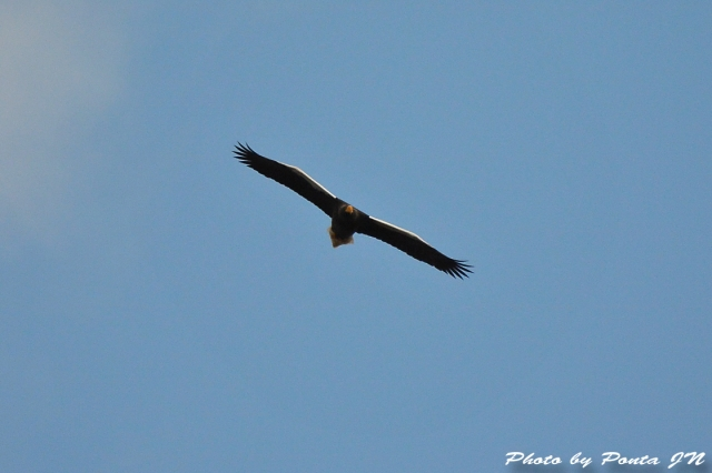 bird1512-0113.jpg